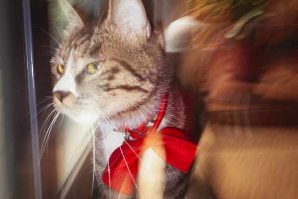 The Cat Who Is The Curator Of The KATO Photography Library